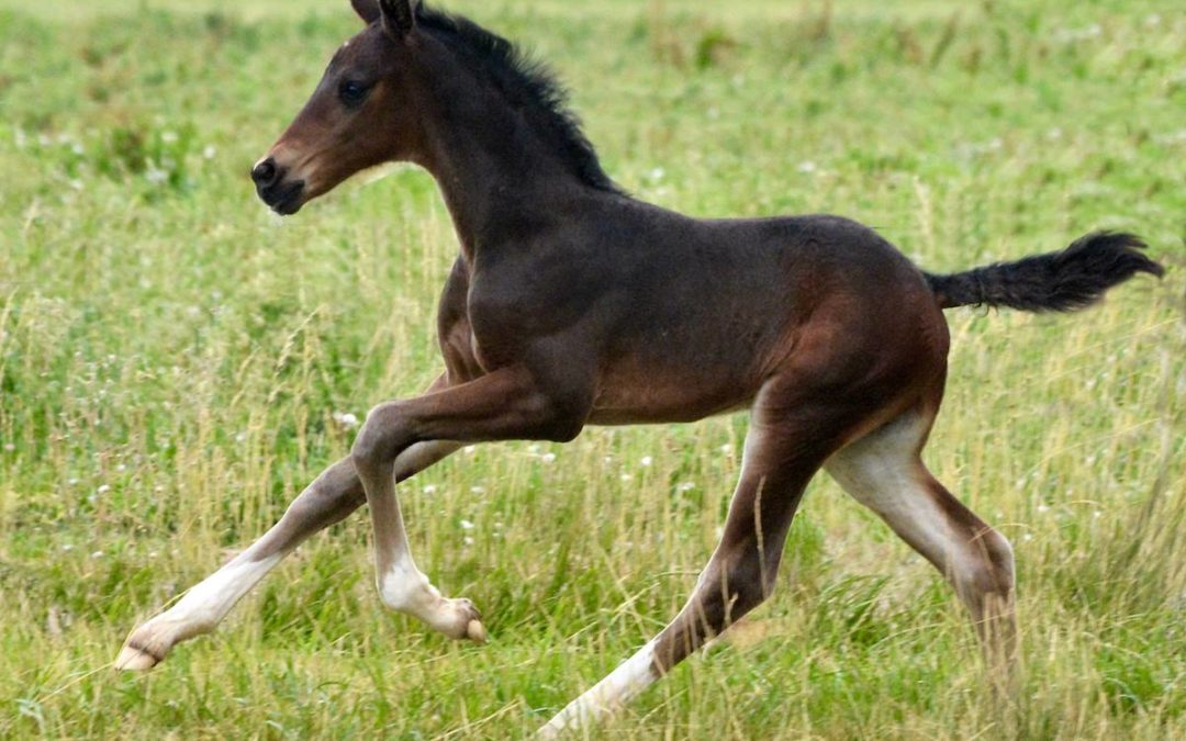 Registering your foal