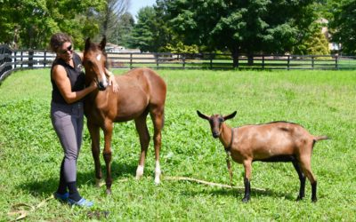 How I raised my orphan foal